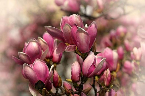 Flower, Flowers, Tree, Nature, Close, Plant, Purple
