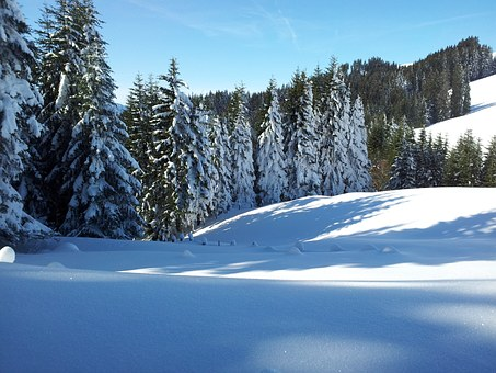 Wintry, Winter, Alpine, Forest, Snow, Schee Shoe Hikes