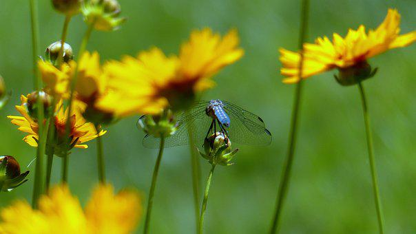 Plant, Flower, Blossom, Insect, Dragon Fly