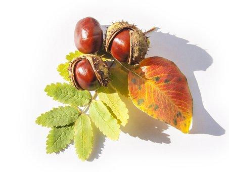 Three Kashtanchika, Composition, Leaves