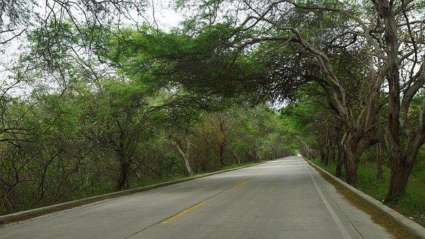 Ecuador, Manabi, Road, Way, Tourism, Travel, Nature