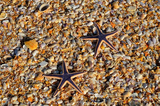 Starfish, Wildlife, Nature, Ocean, Marine, Sea, Nobody