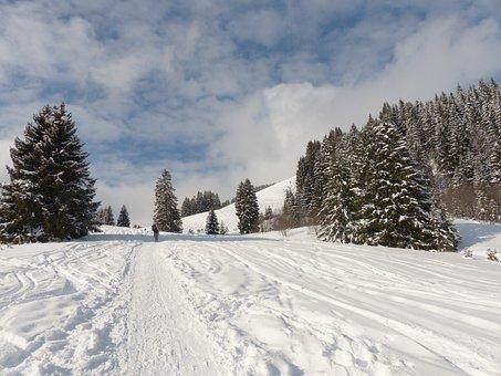 Winter, Wintry, Winter Magic, Snow, Traces, Snow Tracks