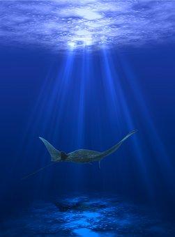Sea, Scat, Animals, Ocean, Fish, Underwater
