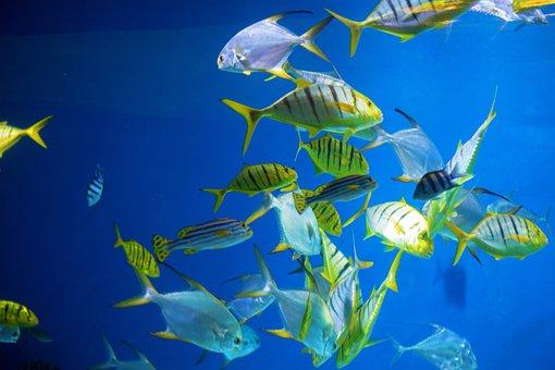 Moskvarium, A Flock Of, Fish, Water, Underwater, Grey