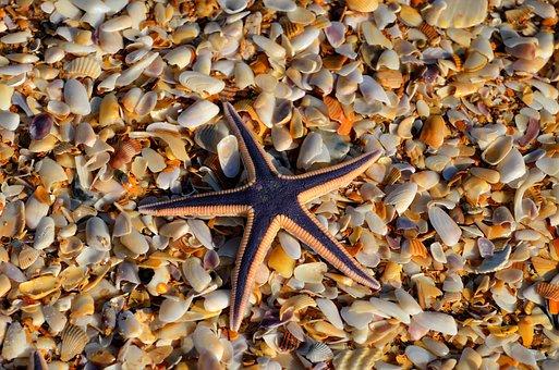 Starfish, Wildlife, Nature, Ocean, Marine, Sea, Nobody
