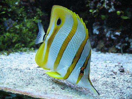 Fish, Aquarium, Underwater, Nature, Zoo