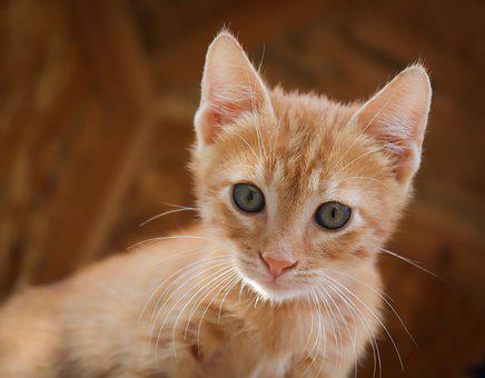 Cat, Small, Red, Cat Baby, Baby Cat, Kitten, Sweet