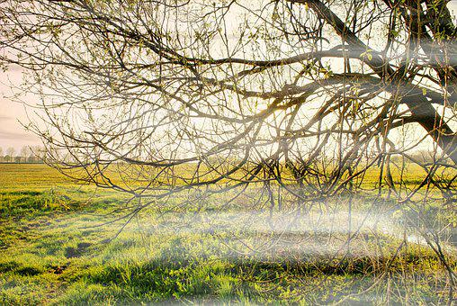Spring, The Fog, Meadow, Landscape, Nature, Tree, Grass