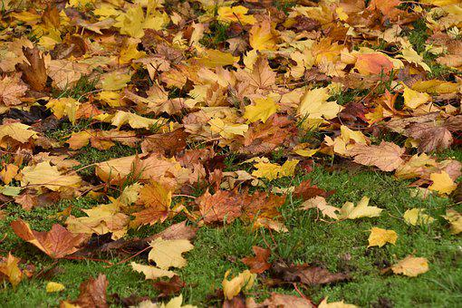 Leaves, Colors Fall, Nature, Colorful
