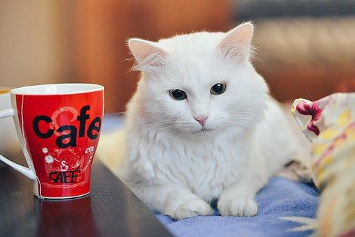 Cat Drinking Tea, Tea Party Cat, White Cat, Red Mug