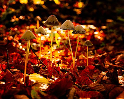 Mushroom, Autumn, Forest, Nature, Red, Toxic, Fungus