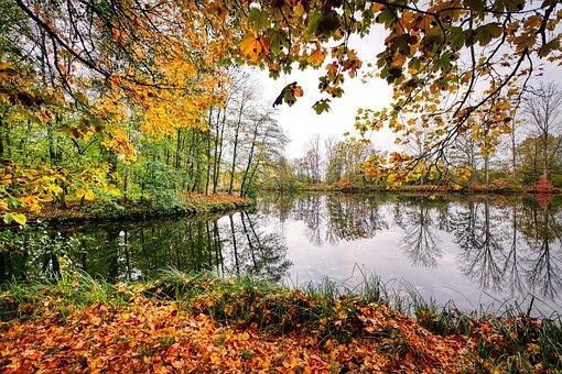 Leaves, Leaf, Autumn Colours, Autumn, Nature, Green