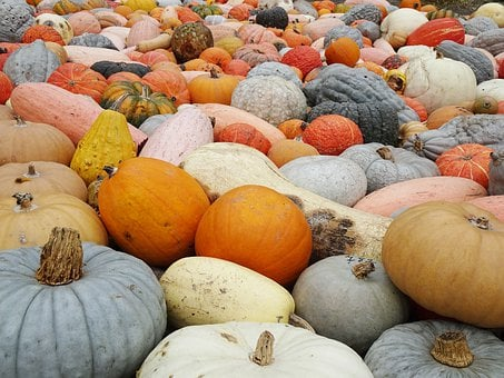 Pumpkins, Hidden Object, Diversity, Mass, Quantitative