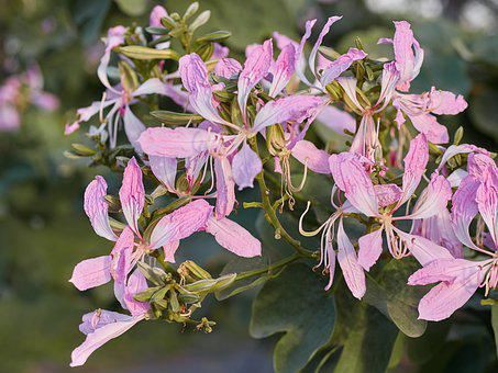 Flower, Plant, Flowers, Petals, Pink, Spring, Beautiful