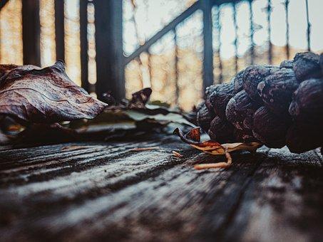 Autumn, Porch, Ground Level, Home, Outdoor