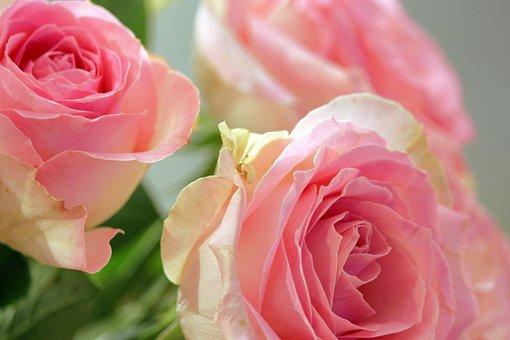 Roses, Bouquet Of Roses, Romance, Romantic, Wedding
