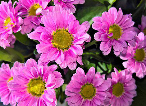 Flowers, Asters, Bouquet, Cut Flowers, Autumn