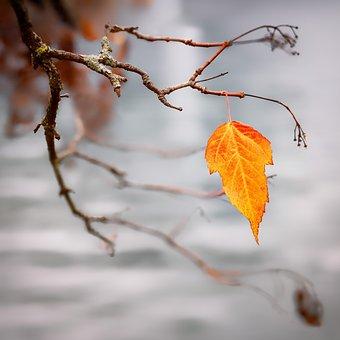 Autumn, Autumn Colours, Leaf, Autumn Leaf, Autumn Mood