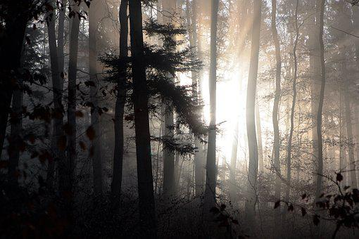 Forest, Fog, Winter, Ghostly, Sunrise, Backlighting