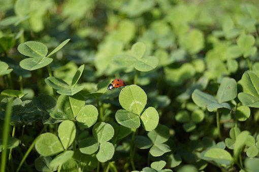 Ladybug, Beetle, Nature, Insect, Red, Points, Summer