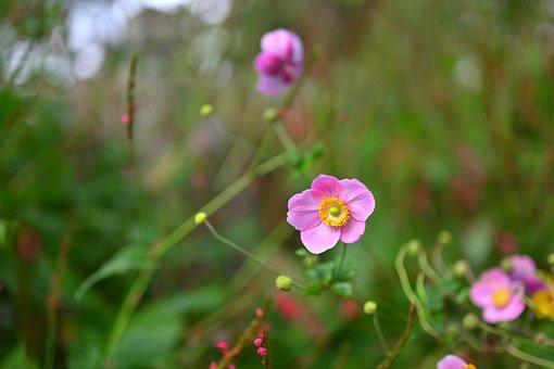 Flower Power, Flower, Summer, Close Up, Nature, Bloom