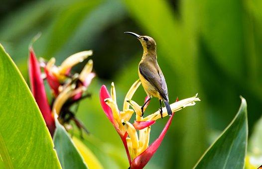 Sunbird Perch, Wild, Bird, Small, Wildlife, Olive, Back