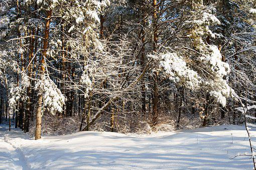 Snow, Winter, Frost, Coldly, Trees, The Bushes, Branch