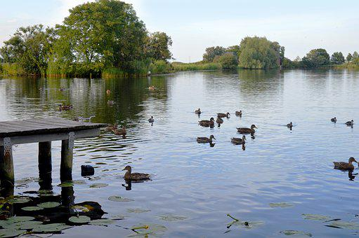 Eider, Schleswig-holstein River, Water, Ducks, Bank