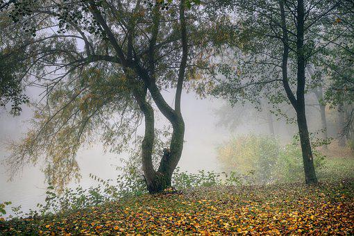 Fog, Landscape, Pond, Lake, Water, Haze, Autumn, Tree