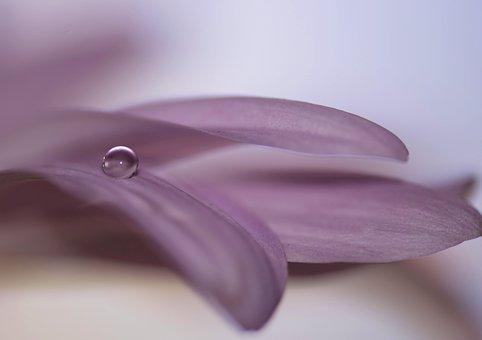 Water Drop, Flower, Nature, Spring, Water, Wet, Garden