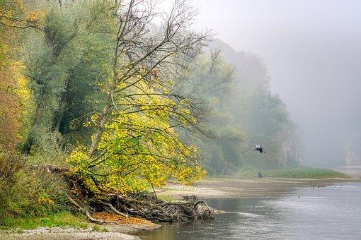 Autumn, Forest, Leaves, Autumn Colours, Bank, River