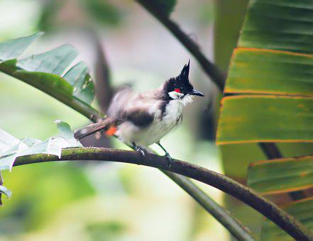 After Bath Bulbul, Wild, Bird, Perch, Wildlife, Outdoor