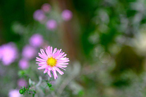 Flower Power, Flower, Garden, Nature, Summer, Bloom