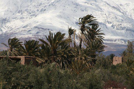 Mountain, Palms, Morocco, Landscape, Africa, Nature