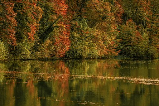 Forest, Autumn, Water, Mirroring, Fall Foliage