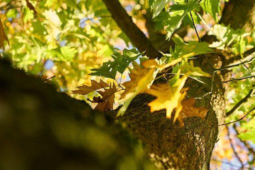 Log, Bark, Leaves, Colorful, Autumn, Nature, Sunlight