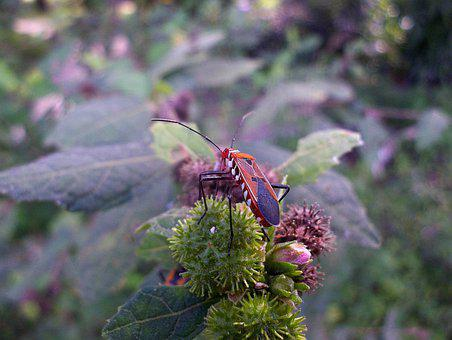 Insect, Invertebrate, Nature, Wildlife, Biology, Wing