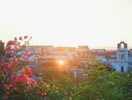 Cuba, Cienfuegos, Sundown, Sunset, Sun, Flower, Plant