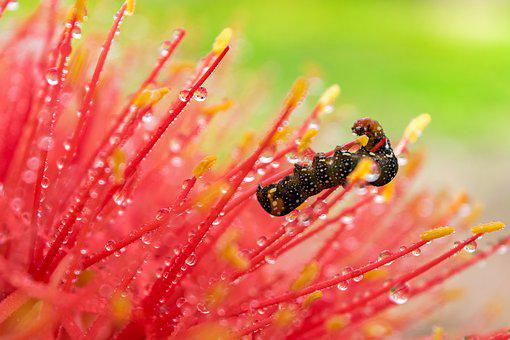Macro, Close Up, Flower, Nature, Insect, Raindrop