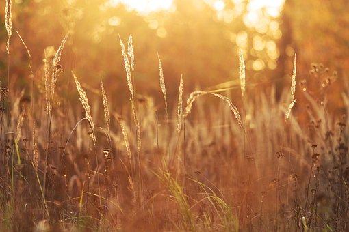 Nature, Grass, Sun, Słońce, Sunny, łąka, Bokeh, Meadow