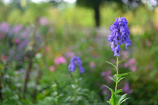 Flower Power, Flower, Summer, Nature, Garden, Bloom