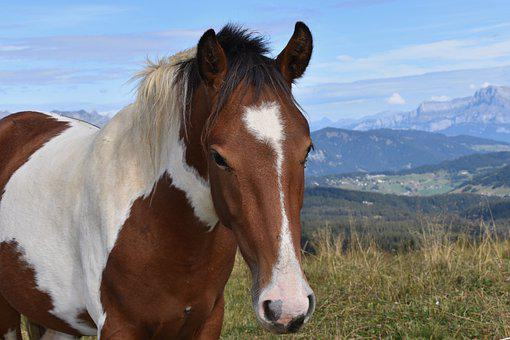 Horse, Horse Bai, Equine, Mane, Nature, Prairie