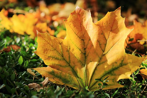 Autumn, Colors, Fall Colors, Fall Of Leaves