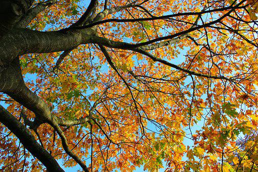 Tree, Autumn, Colors, Fall Colors, Fall Of Leaves