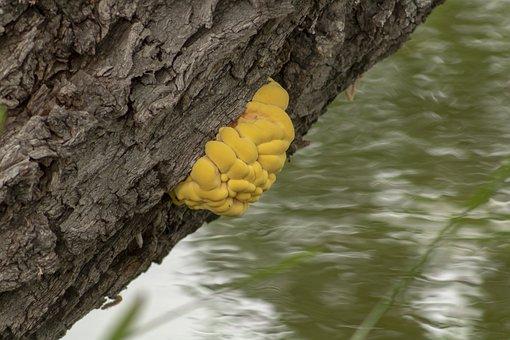 Mushroom, Fag In, Spore, Fungus, Undergrowth, Nature