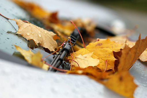 Leaves, Auto, Windshield Wipers, Autumn, Smooth, Mature