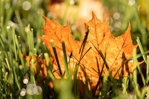 Leaf, Autumn, Leaves, Fall Foliage, Maple, Nature