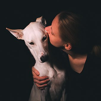 Dog, Love, Pet, Cute, Animal, Friendship, Portrait