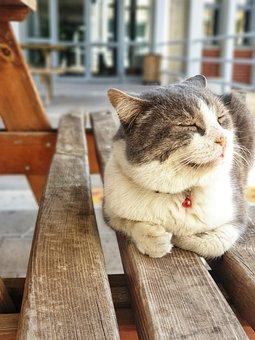 Cat, Happy, Bank, School, Metu, University, Positive